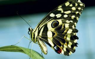 Разведение бабочек в домашних условиях как бизнес