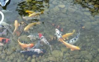 Разведение рыбы в бассейнах как бизнес