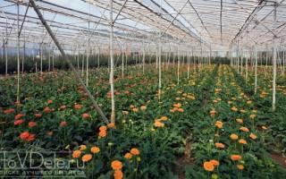 Разведение цветов как бизнес