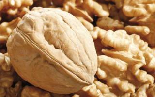 Ореховый сад как бизнес
