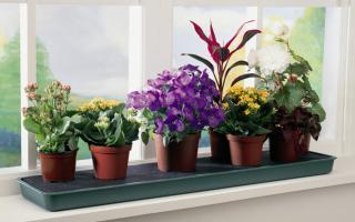 Выращивание домашних цветов как бизнес
