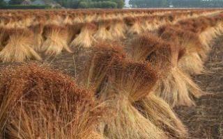 Переработка льна в России предприятия