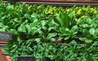 Зелень в теплице круглый год как бизнес