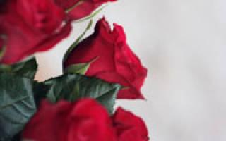 Выращивание роз как бизнес