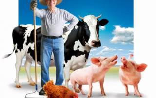 Сельское хозяйство с чего начать бизнес