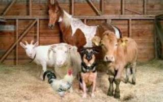 Разведение домашних животных как бизнес