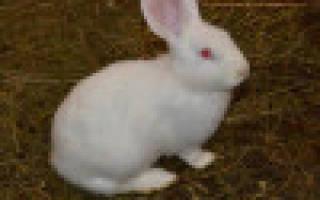 Выгодно ли держать кроликов как бизнес?