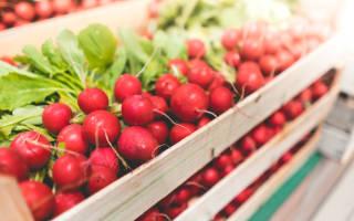 Выращивание редиски в теплице как бизнес