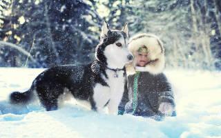 Чем можно заняться зимой бизнес