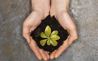 Питомник хвойных растений как бизнес
