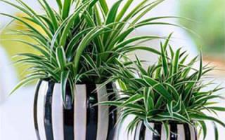 Разведение комнатных растений как бизнес