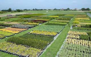 Питомник растений как бизнес