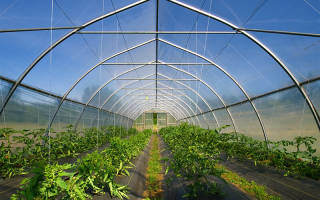 Выращивание гидропоники как бизнес