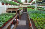 Выращивание рассады цветов как бизнес
