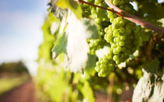 Производство домашнего вина как бизнес