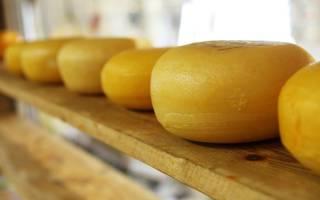 Домашняя сыроварня как бизнес