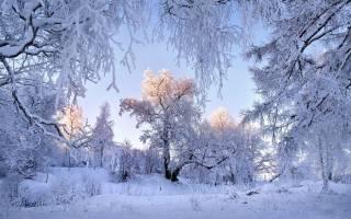 Что можно продавать зимой бизнес