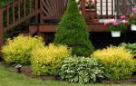 Выращивание декоративных растений как бизнес