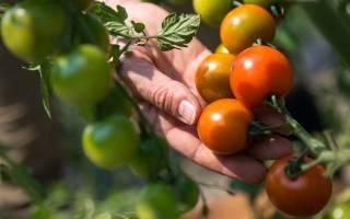 Этапы создания частных сельскохозяйственных предприятий